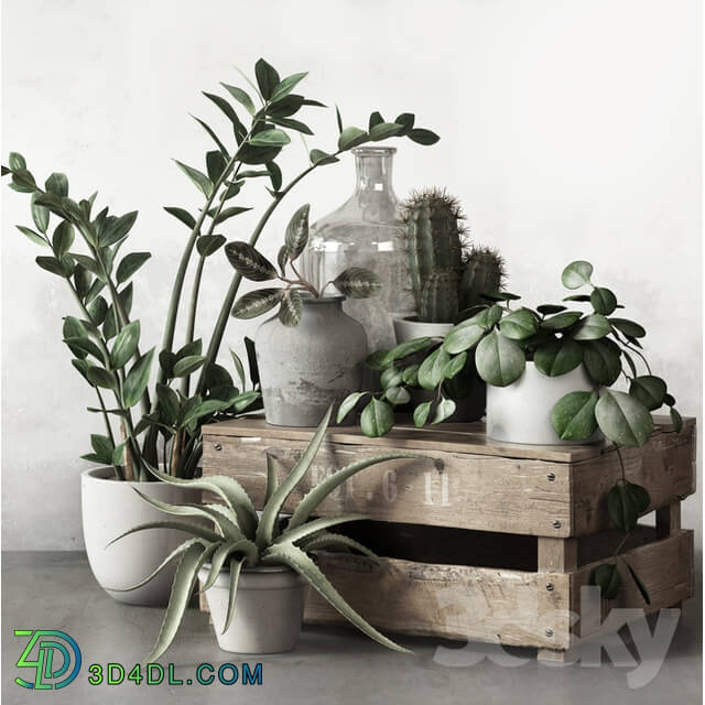 Plant - PLANTSET 2