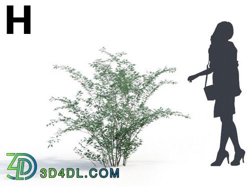 Maxtree-Plants Vol06 Cotoneaster franchetii 01 H