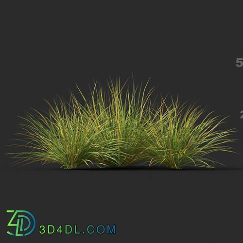 Maxtree-Plants Vol44 Lomandra fluviatilis 01 03