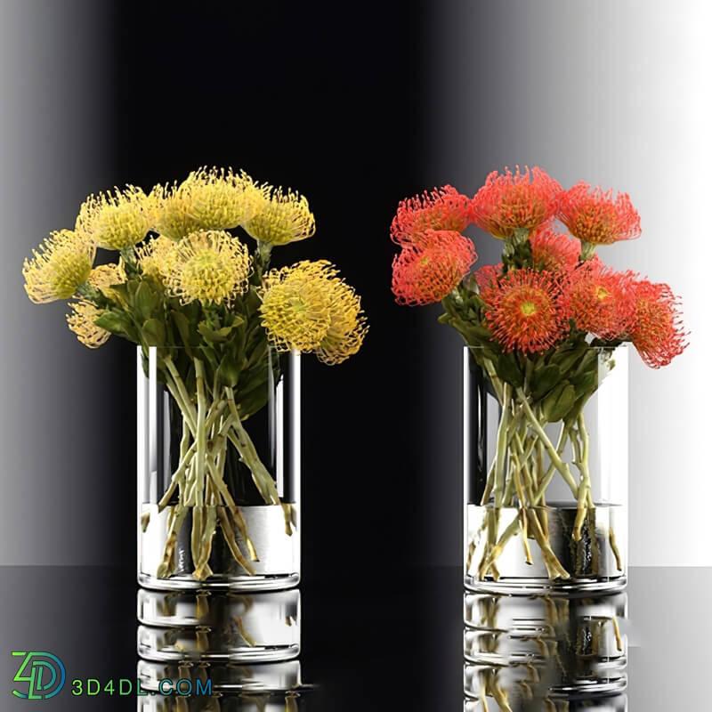 Design Connected Pincushion Protea