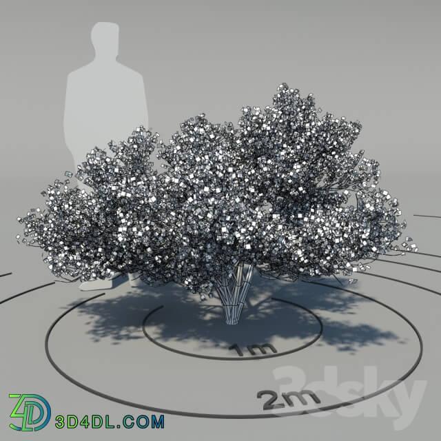 Plant - Flowering dogwood _Cornus florida_